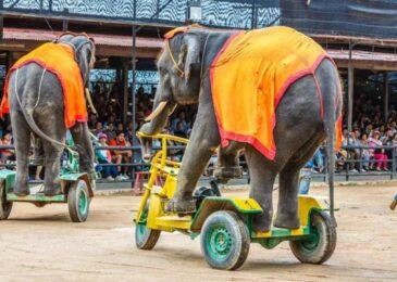 Ghé Thái Lan đừng bỏ lỡ xiếc Voi ở Pattaya