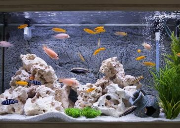 Top 4 vật liệu lọc nước hồ cá hiệu quả giá rẻ